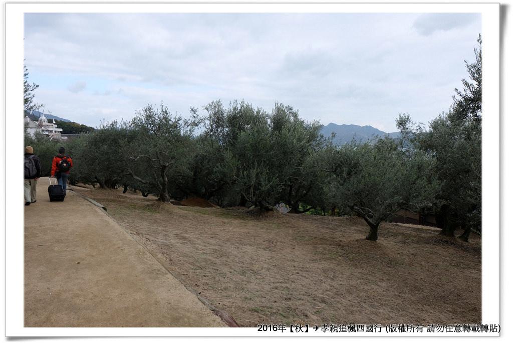 橄欖公園-004