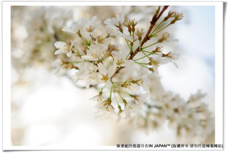太宰府-032