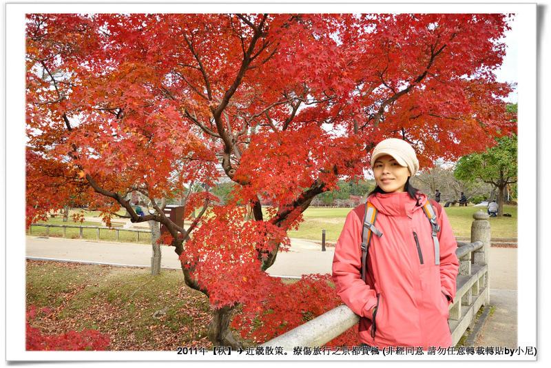 奈良公園005