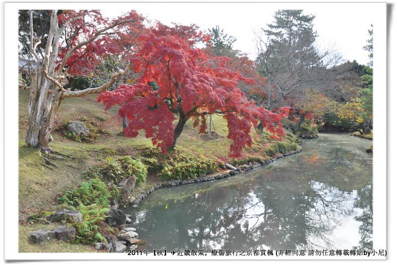 奈良公園001