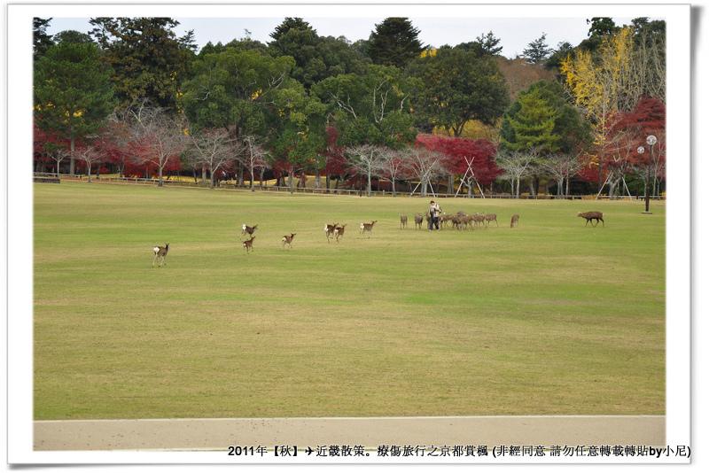 奈良公園006