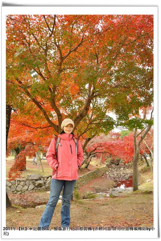 奈良公園009