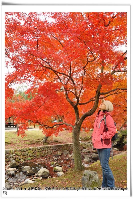 奈良公園010