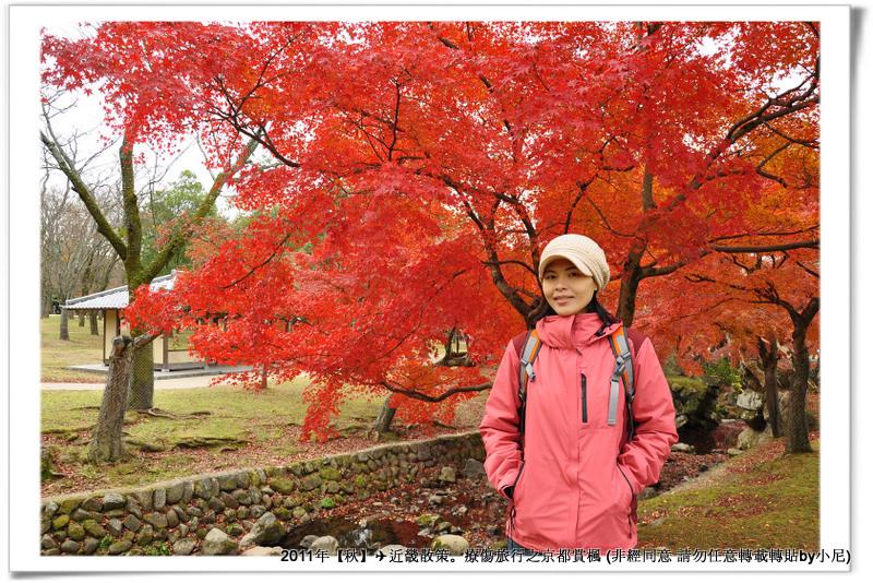 奈良公園011