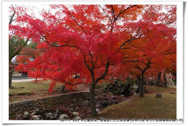 奈良公園013