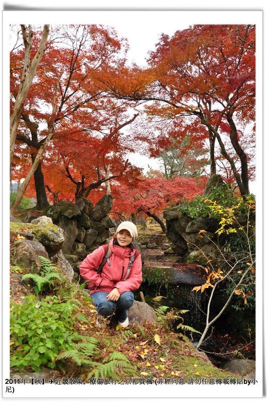 奈良公園014