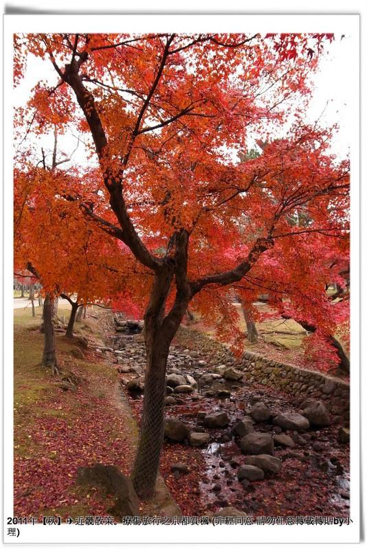 奈良公園015