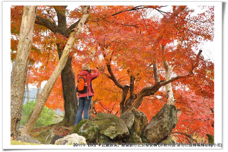 奈良公園012