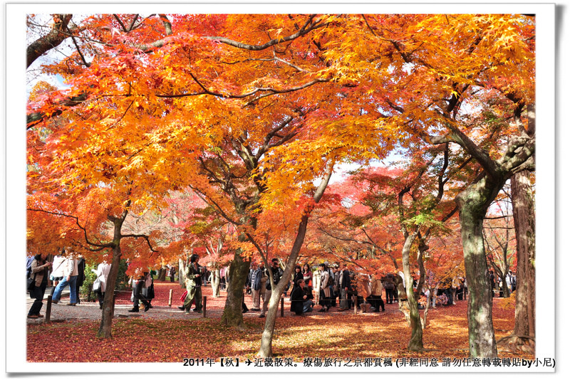東福寺026