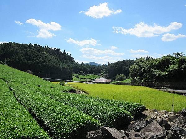 Shirakawa_hirono_tea_farm.jpg