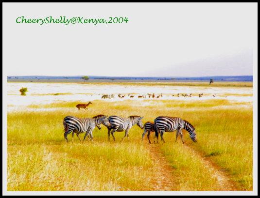 坦桑尼亞 Tanzania