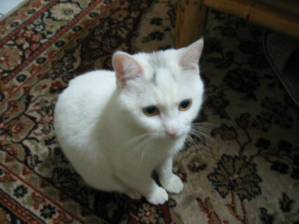 我是貓咪?還是老鼠?