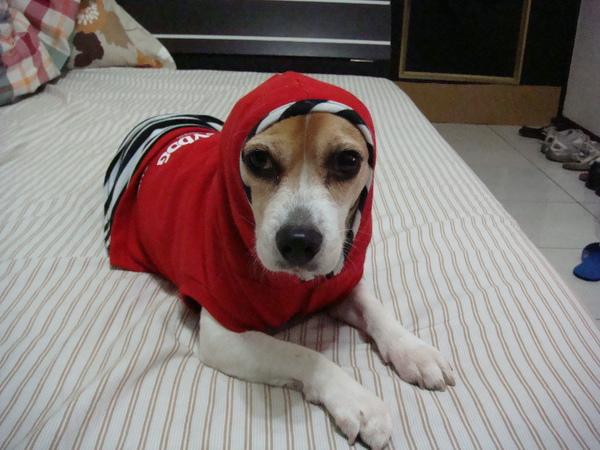 小紅帽-一整個囧
