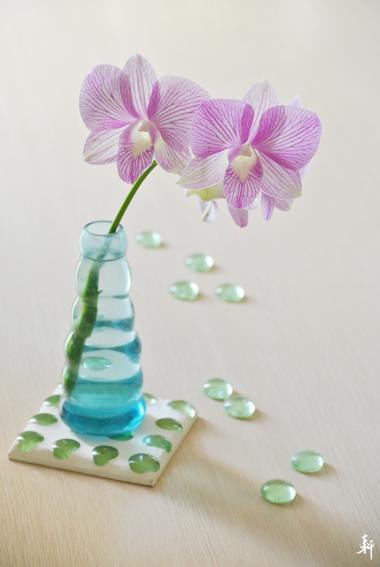 石斛蘭-紫色.jpg