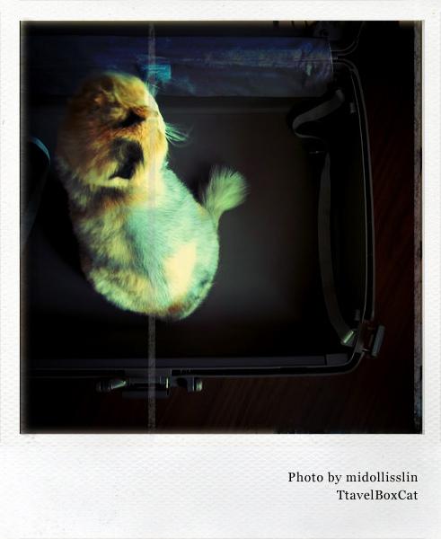 polaroid_TravelBoxCat.jpg