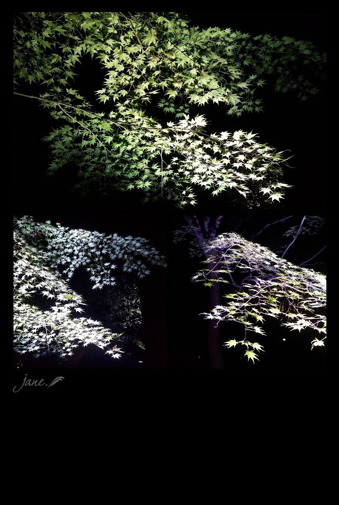 JanePhoto_1545280235400