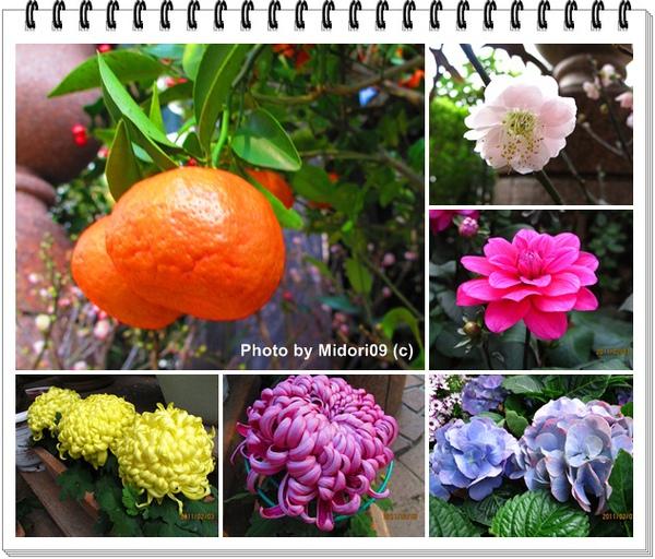 flora 01.jpg