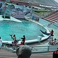 ♡野柳海豚表演♡
