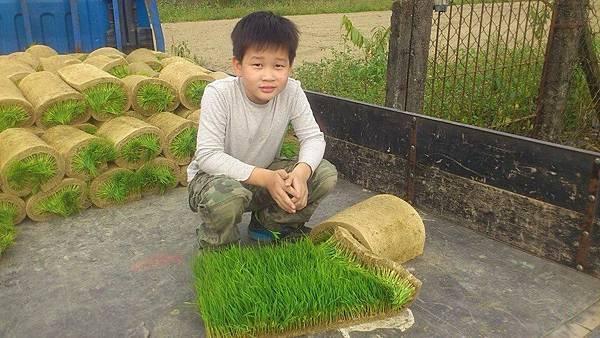 米發發的糯米田