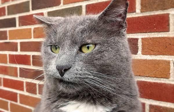 cat-2483826_1920.jpg