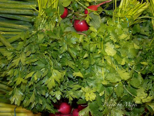 Herbs 3 (1 of 1).jpg