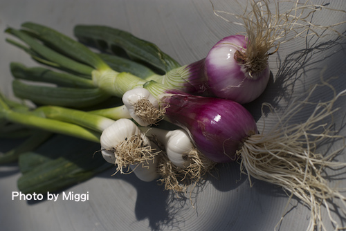onion.tiff