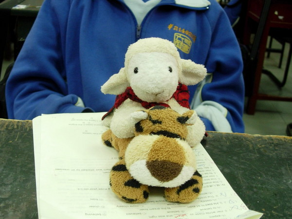 鴨霸小羊&可憐的小虎