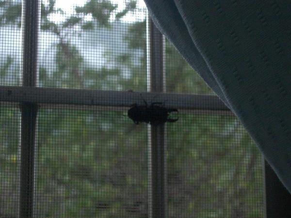意外發現的楸形蟲