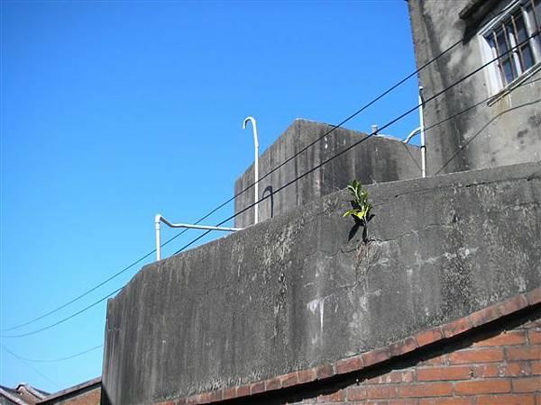 牆上的一株綠