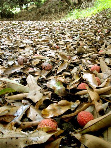 地上也吊滿一堆,混著落葉