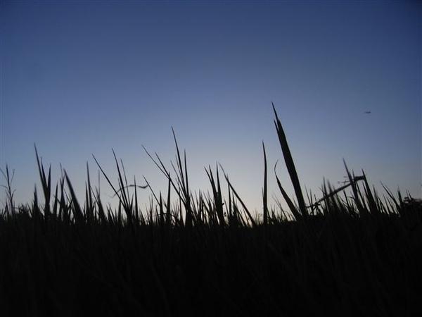 太陽漸漸下山去