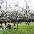來到梅園還瞬間有種日本的賞櫻風味,好多人來野餐賞梅喔!