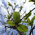阿~綠芽都出來了!!春天要到了!!