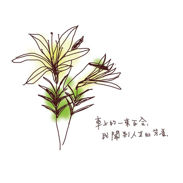 百合2.jpg