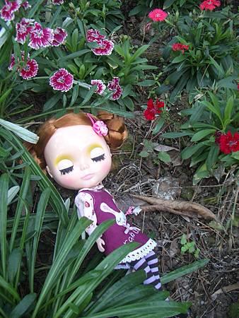 花與夢2.jpg