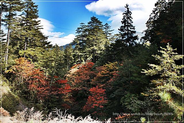 1314946845 856510885 - 『台中遊記』福壽山賞楓行--傳說中的108彎道楓之谷