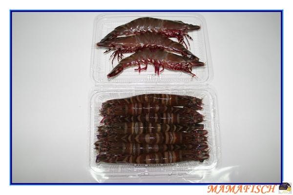 斑節蝦-小-一盒0.5公斤500元.jpg