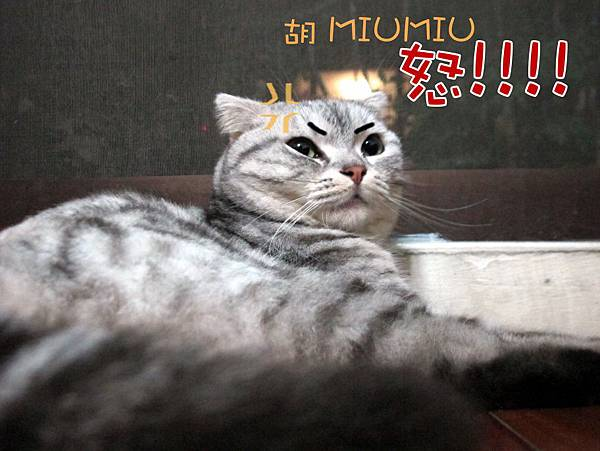 MIUMIU(字)01.JPG
