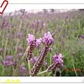 nEO_IMG_DSC06381.jpg