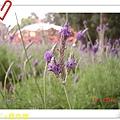 nEO_IMG_DSC06505.jpg