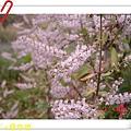 nEO_IMG_DSC06530.jpg