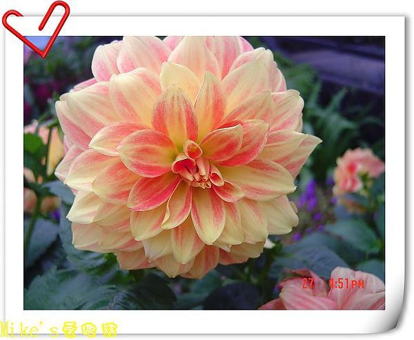 nEO_IMG_DSC06533.jpg