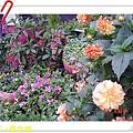 nEO_IMG_DSC06535.jpg
