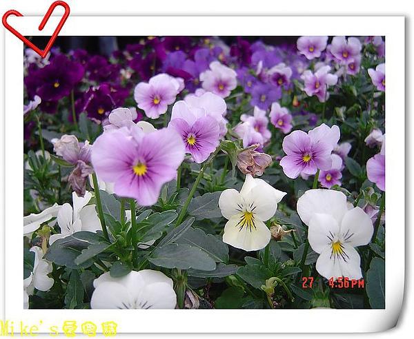 nEO_IMG_DSC06539.jpg
