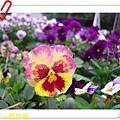 nEO_IMG_DSC06540.jpg