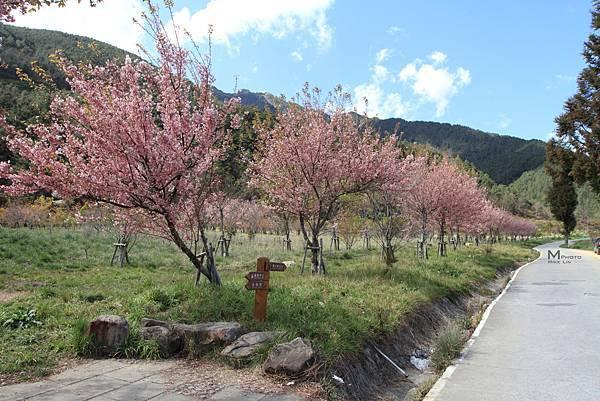 武陵農場 Wuling farm