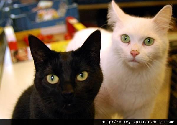 黑貓與白貓