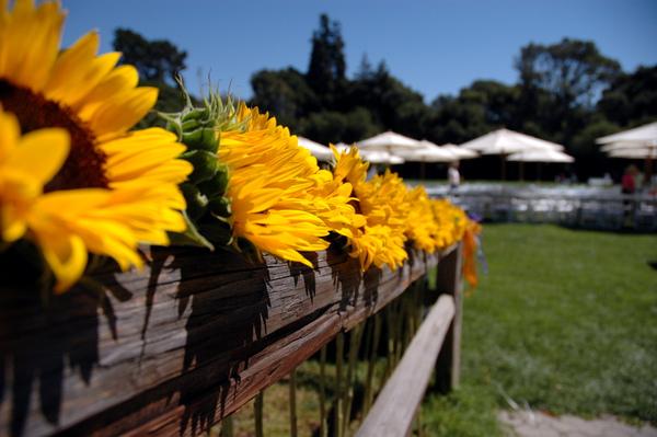 Wedding Sunflowers.jpg