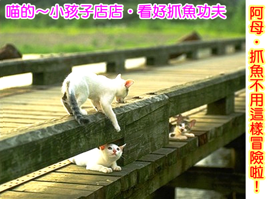 Cats_38.jpg
