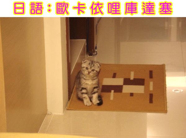 Cats_85.jpg